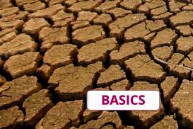 Folgen des Klimawandels: Global und regional